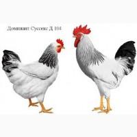 Доминант 104, 192, 300, 301, 459, 107. Цыплята