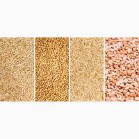 Куплю зернові та відходи зернових