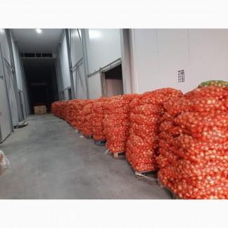 Лук продажа. Овощи оптом Ивано-Франковск