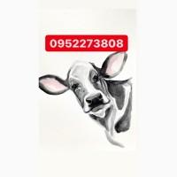 Куплю коров свиней лошадок