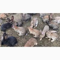 БМВД для кроликов