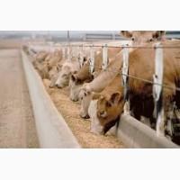 Белковые витаминно-минеральные корма для коров телят бычков и птици