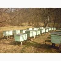 Продам бджолопакети карпатки. Мукачево