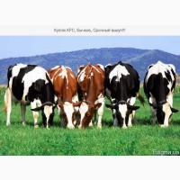 Премикс для дойных коров