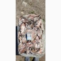 Продам свежемороженую рыбу – густера, окунь. толстолоб. Опт
