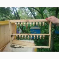 БДЖОЛОМАТКИ Карпатка Плідні матки 2020 (Пчеломатки, Бджоломатки, Бджолині матки Укрпочта