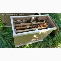Бджолопакети Карпатської породи, 4- рамочні, на квітень, з сильних сімей. Доставка