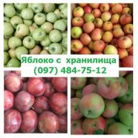 Яблоко с сада и хранилища урожай 2021