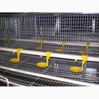 Оборудование для выращивания ремонтного молодняка кур-несушек в многоярусных клетках