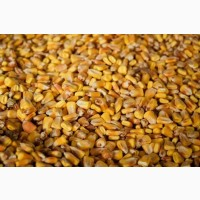 Продаж кукурудзи