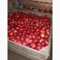 Продам яблоко оптом Рубиновые Дуки
