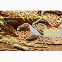 Купимо фуражну кукурудзу