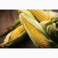 Куплю кукурудзу з місця