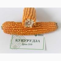 Насіння кукурудза Гран 310 ВНІС