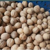 Куплю орехи грецкие целые и очищенные