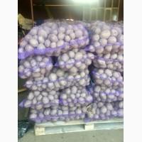 Продам картофель Белла росса