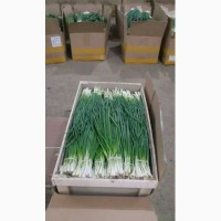 Продам зелень зелена