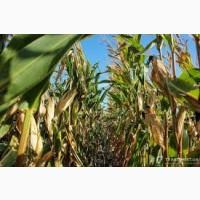Купим зерновідходи кукурудзи