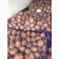 Продам картофель 5+и посевной карто, сорта, Королева Анна, Бриз, Галла, Джили, Ред Скарлет