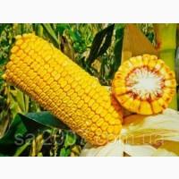 Семена гибрида кукурузы Хотин ФАО 280