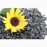 Закупівля соняшнику олійного