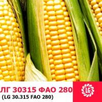 Семена кукурузы ЛГ 30315 ФАО 280 ( LG 30315)