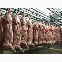 Продаємо оптом свинячі туші, м#039;ясо, субпродукти. Доставляємо авторефрижераторами