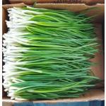 Продам зелену цибулю оптом/вроздріб