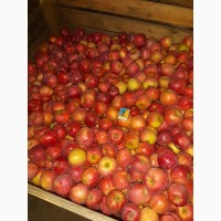 Продам яблоко Флорина оптом