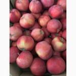 Продам яблоко Ред Чиф