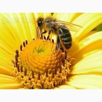 Продаю Бджолопакети Карпатка за договірною ціною