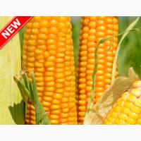 Насіння гібриду кукурудзи ВНІС ТОР (фао 280) 2020 року урожаю