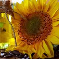 Семена подсолнечника НС Таурус, 109-113 дней