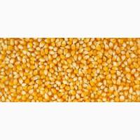 Купим кукурузу, сухую и влажную Винницкая обл