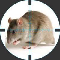 Уничтожение крыс и мышей в Киеве и Киевской области по системе HACCP