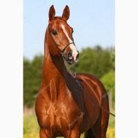 Куплю коней Живым весом дорого