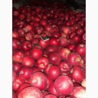 Продам яблоко оптом Айдаред