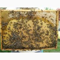 Продам 10 бджолопакетів