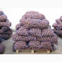 Продам картофель гринада белла роса