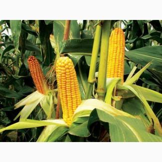 Семена кукурузы ЛГ 3255 ФАО 250