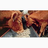 Комбикорм для крупного рогатого скота. объемы большие (тисячи тонн). Возможен експорт
