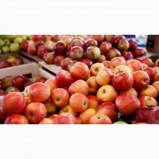 Закупівля яблук опт. Куплю яблука за вигідною ціною