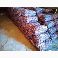 Распродаем картофель белла роса гринада