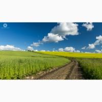 Товариство візьме в оренду земельні паї на вигідних умовах