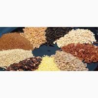 ЗАКУПКА. Пшеница, кукуруза, ячмень, соя и др. культуры