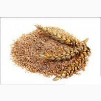 Предприятие закупает отруби пшеничные Киев