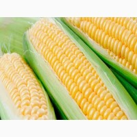 Куплю кукурудзу. Продати кукурудзу