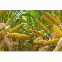 Оптовая закупка зерновых культур. Закупка отходов зерновых