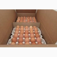 Яйцо куриное оптом