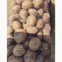 Продам картошку белая роса граната